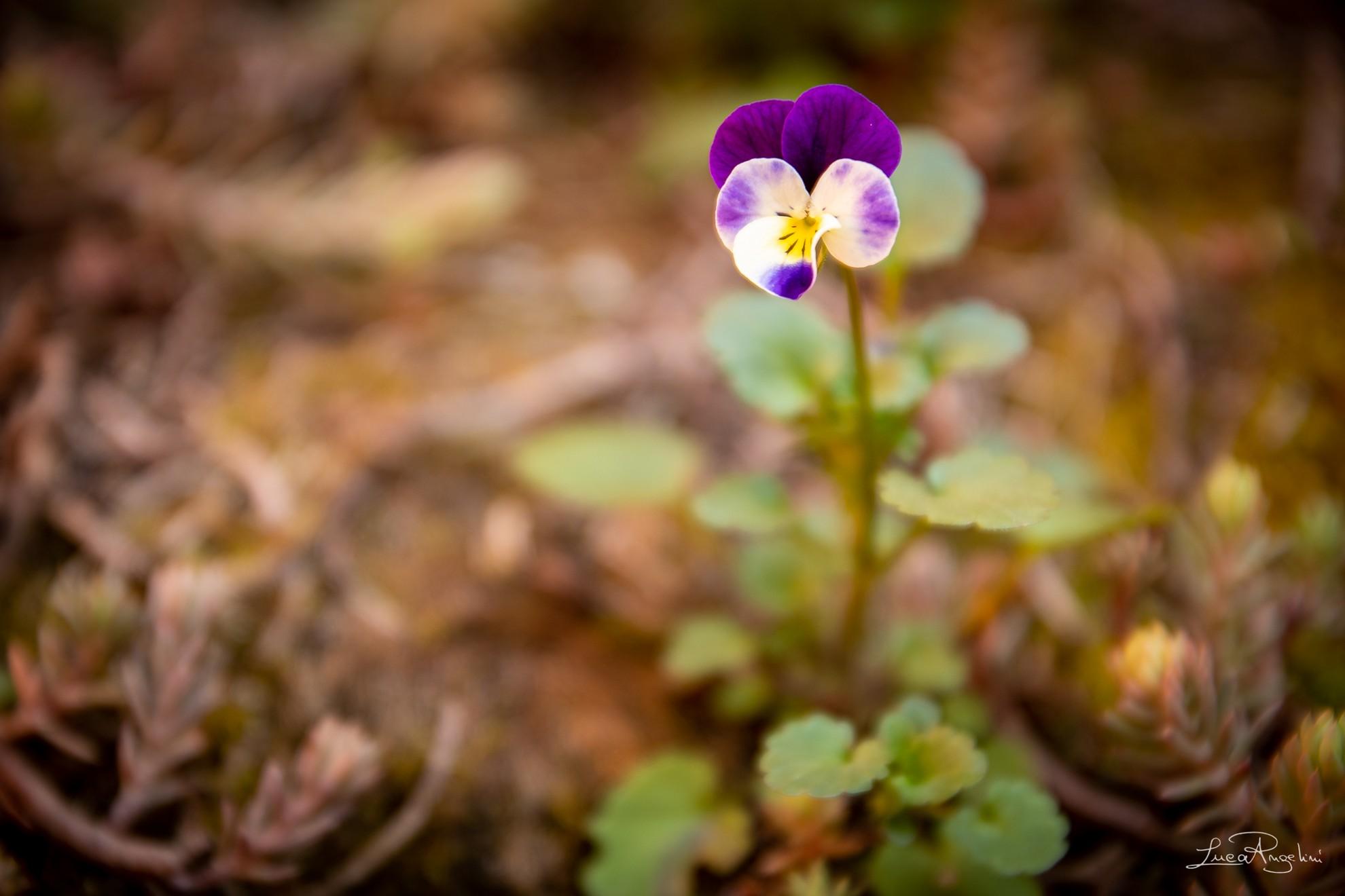 """- A MANO A MANO - RINO GAETANO """"... Ma dammi la mano e torna vicino può nascere un fiore nel nostro giardino che neanche l' inverno potrà mai gelare può crescere un fiore per questo mio amore per te..."""""""