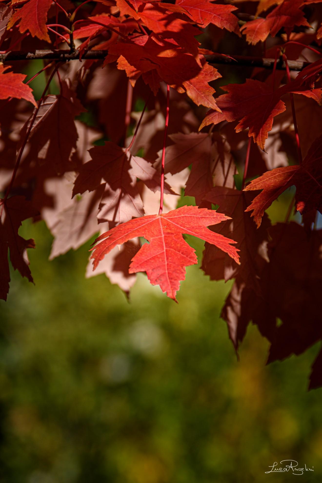 """- L'AUTUNNO TI DONA - STADIO """"...Tu sei luogo, sei spazio, sei tempo e piangi quando piove ma l'autunno ti dona..."""""""
